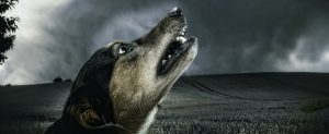 Apoquel: Dog Miracle Drug With a Dark Side