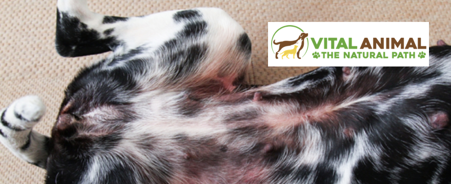Cytopoint: High Tech Answer to Your Itchy Dog?
